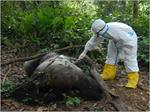 Preventing Epidemics in Republic of Congo by Monitoring Wildlife Mortality